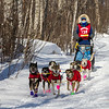 Alex LaPlante near Tofte at the 2014 John Beargrease Mid-Distance race