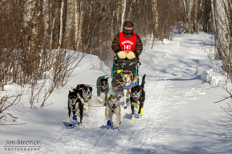 Billie Driver near Tofte at the 2014 John Beargrease Mid-Distance race