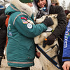 Blake Freking's dog Spruce with friends before start of 2014 John Beargrease Marathon race