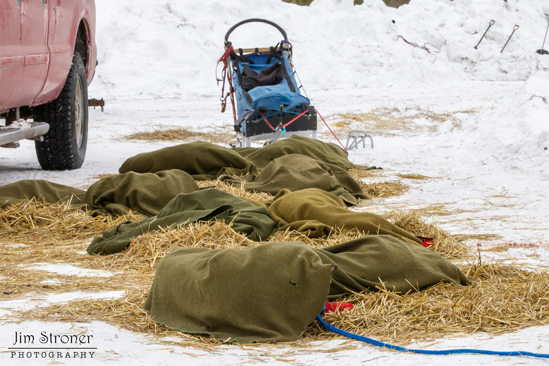 Colleen Wallin's team resting at Hwy 2 checkpoint during the 2014 John Beargrease Marathon race