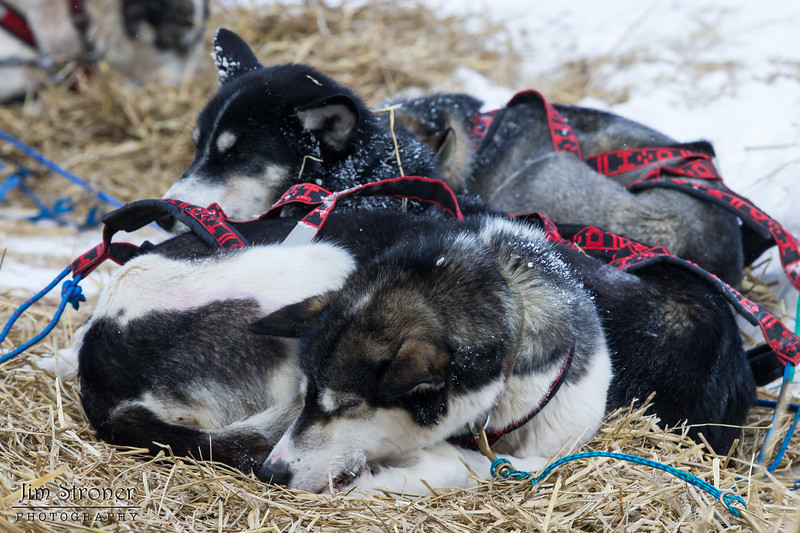 Keith Aili's team resting at Devil Track lake checkpoint during the 2014 John Beargrease Marathon race