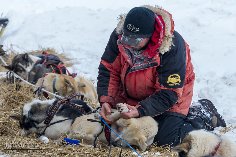 Keith Aili caring for his team at the Devil Track lake checkpoint during the 2014 John Beargrease Marathon race