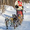 Michael Bestgen near Tofte at the 2014 John Beargrease Mid-Distance race
