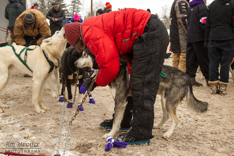 Peter McClelland's team getting booties before the 2014 John Beargrease sled dog race