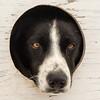Sled dogs waiting for start of the 2014 John Beargrease sled dog race