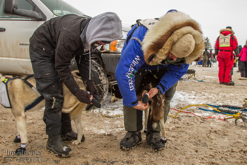 Blake Freking's team getting booties before the 2014 John Beargrease sled dog race