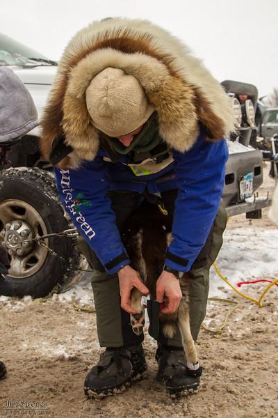 Blake Freking's team getting booties before the 2014 John Beargrease sled dog race