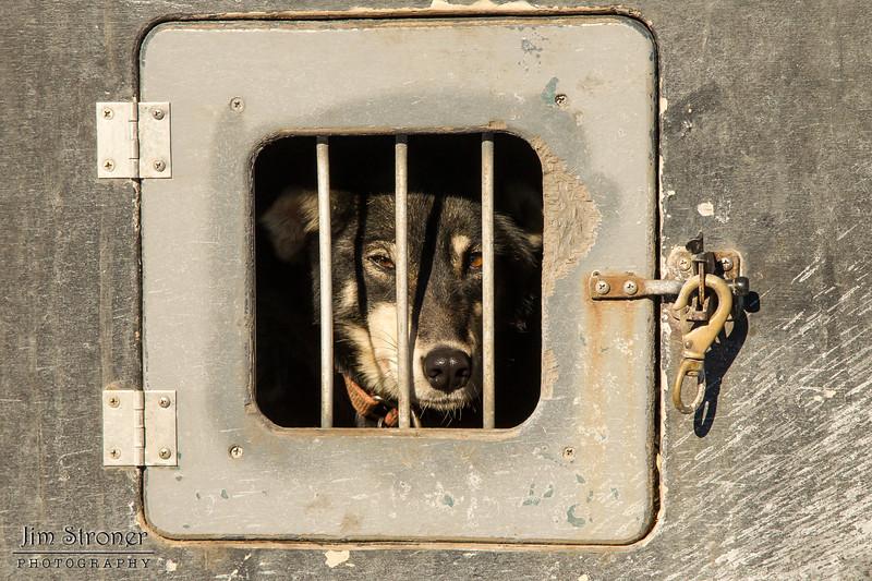2014 John Beargrease Sled dog race vet check