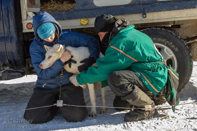 Dusty Klaven at 2014 John Beargrease Sled dog race vet check