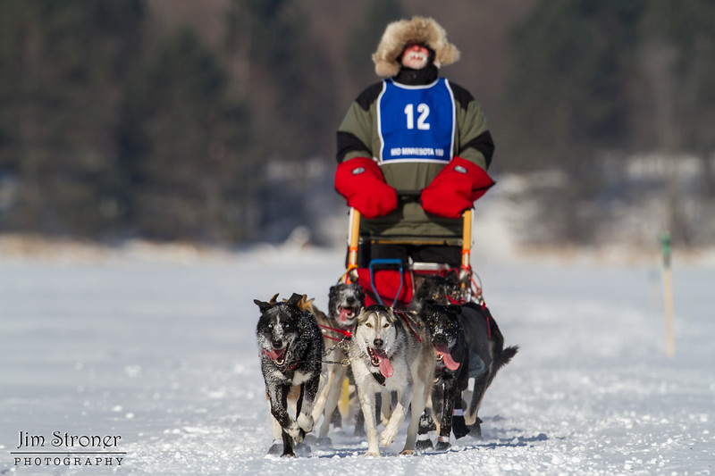 Bob Johnson on the trail crossing Windy Lake during the Mid-Minnesota 150 sled dog race