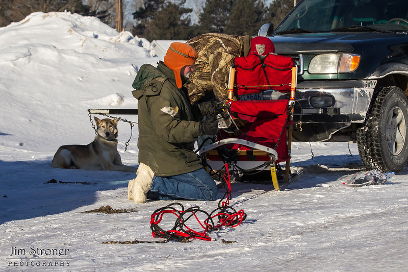Bob Johnson preparing his sled at the start of the Mid-Minnesota 150 sled dog race