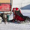 Linus Meyer preparing his sled at the start of the Mid-Minnesota 150 sled dog race