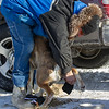 Neal Seeger helping but booties on Linus Meyer's team at the start of the Mid-Minnesota 150 sled dog race