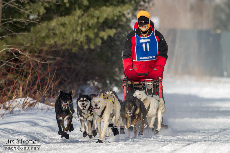 Linux Meyer on the trail near Remer at the start of the Mid-Minnesota 150 sled dog race