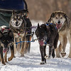 Patty Salls on the trail near Windy Lake during the Mid-Minnesota 150 sled dog race