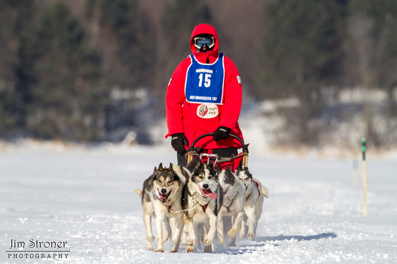 Saul Ellering on the trail crossing Windy Lake during the Mid-Minnesota 150 sled dog race