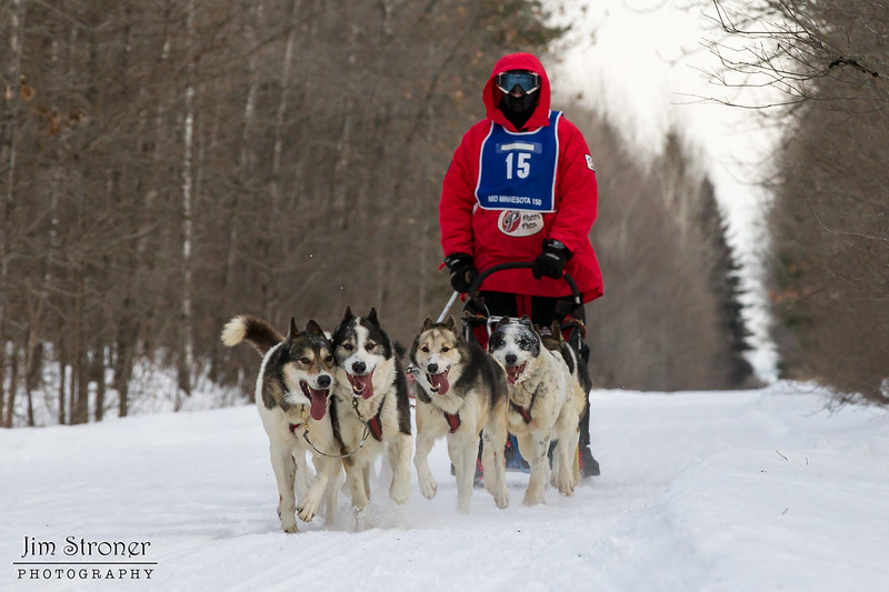 Saul Ellering on the trail near Remer during the Mid-Minnesota 150 sled dog race