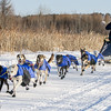 Ryan Anderson's winning 12-dog team near the start of the 2015 WolfTrack Classic