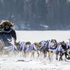 Ryan Anderson's winning 12-dog team crossing Bear Head Lake during the 2015 WolfTrack Classic