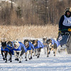 Ryan Anderson's winning 12-dog team near the start of the 2015 WolfTrack Classic