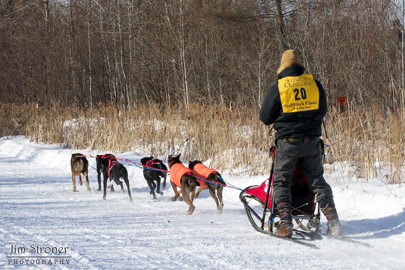 Adam Moore's 6-dog team near the start of the 2015 WolfTrack Classic