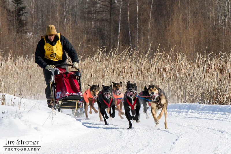 Adam Moore's 6-dog team near the start of the 2015 WolfTrack Classic