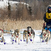Alex LaPlante's 6-dog team near the start of the 2015 WolfTrack Classic