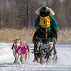 Andrea DeBoer's 6-dog team near the start of the 2015 WolfTrack Classic
