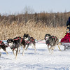 AnnStead's 6-dog team near the start of the 2015 WolfTrack Classic