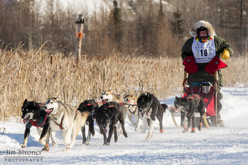Bob Johnson's 8-dog team near the start of the 2015 WolfTrack Classic
