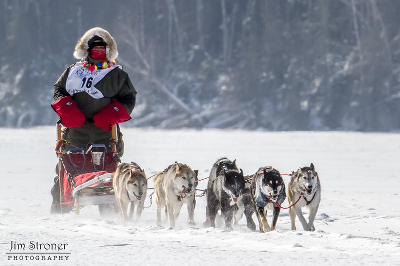Bob Johnson's 8-dog team crossing Bear Head Lake during the 2015 WolfTrack Classic