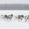 Mark Luttinen's 8-dog team crossing Bear Head Lake during the 2015 WolfTrack Classic