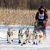 Claire Hendricks 8-dog team near the start of the 2015 WolfTrack Classic