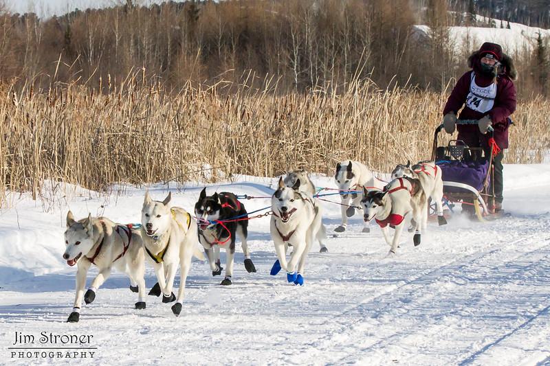 Claire Hendricks 8-dog team near the start of the 2015 WolfTrack Classic