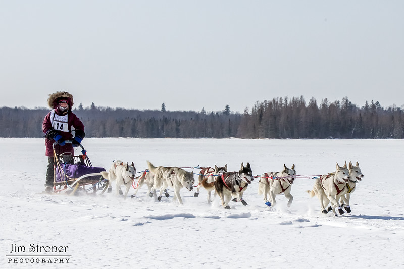 Claire Hendricks 8-dog team crossing Bear Head Lake during the 2015 WolfTrack Classic
