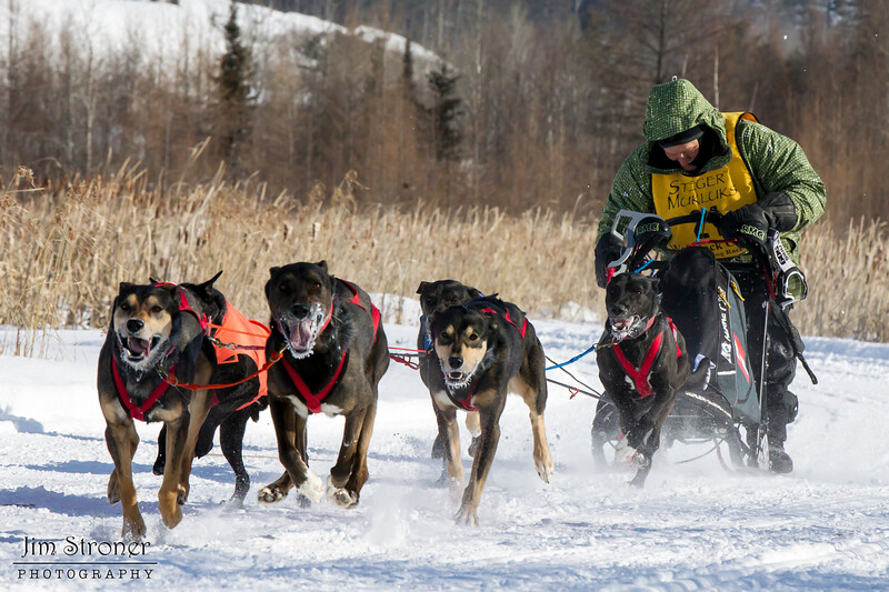 Clayton Schneider's winning 6-dog team near the start of the 2015 WolfTrack Classic