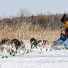 Colleen Wallin's 6-dog team near the start of the 2015 WolfTrack Classic