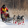 Darcy Stanley-Nord's 6-dog team near the start of the 2015 WolfTrack Classic