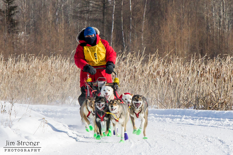 David Gordon's 6-dog team near the start of the 2015 WolfTrack Classic