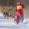 David Gordon's 6-dog team near the start of the 2015 WolfTrack Classic