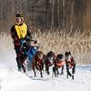 Devon Carr's 6-dog team near the start of the 2015 WolfTrack Classic