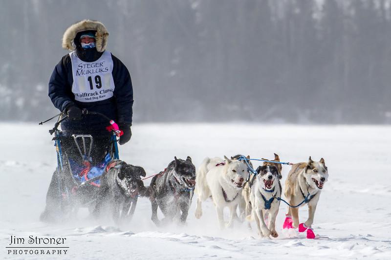 Dusty Klaven's winning 8-dog team crossing Bear Head Lake during the 2015 WolfTrack Classic