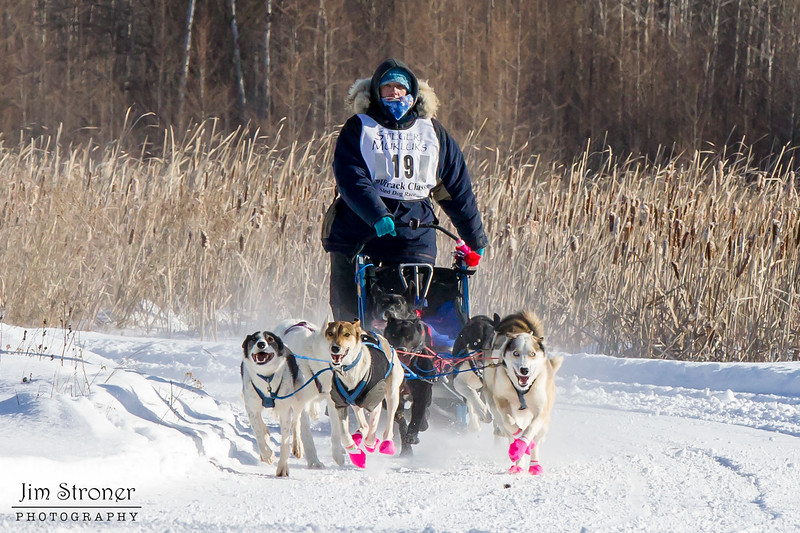 Dusty Klaven's winning 8-dog team near the start of the 2015 WolfTrack Classic