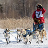 Frank Moe's 8-dog team near the start of the 2015 WolfTrack Classic