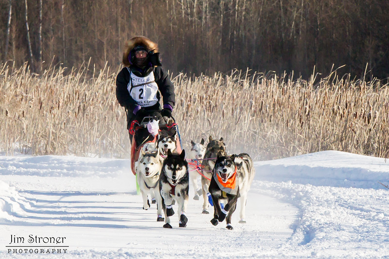 Jennifer Freking's 12-dog team near the start of the 2015 WolfTrack Classic