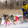 John Ward's 6-dog team near the start of the 2015 WolfTrack Classic