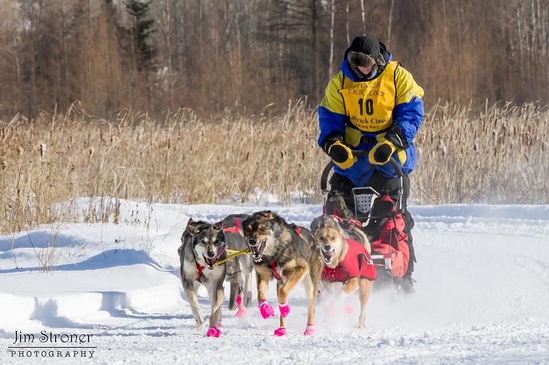 John Ward's 6-dog team near the start of the 2015 WolfTrack Classic