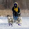 Julie Schmelzer's 6-dog team near the start of the 2015 WolfTrack Classic