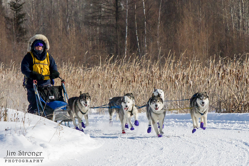 Julie Schmelzer's 6-dog team near the start of the 2015 WolfTrack Classic