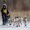 Julie Schmelzer's 12-dog team near the start of the 2015 WolfTrack Classic